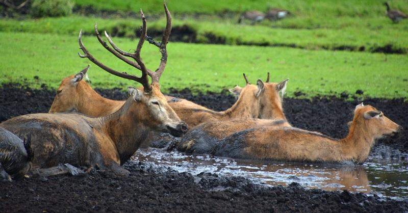 Der Wipfelpfad selbst bietet seinen Besuchern ein ausgedehntes Wildtiergehege mit eindrucksvollem Rotwild und einen nagelneuen Streichelwald in der Nähe des Pfadausgangs.