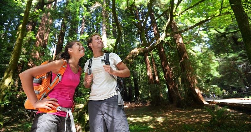 Der Steigerwald Panoramaweg kann grundsätzlich zu jeder Jahreszeit beschritten werden. Sowohl der Frühling, Sommer, Herbst und auch der Winter haben ihren Reiz und bieten Wanderern unterschiedlichste Eindrücke und Gegebenheiten.