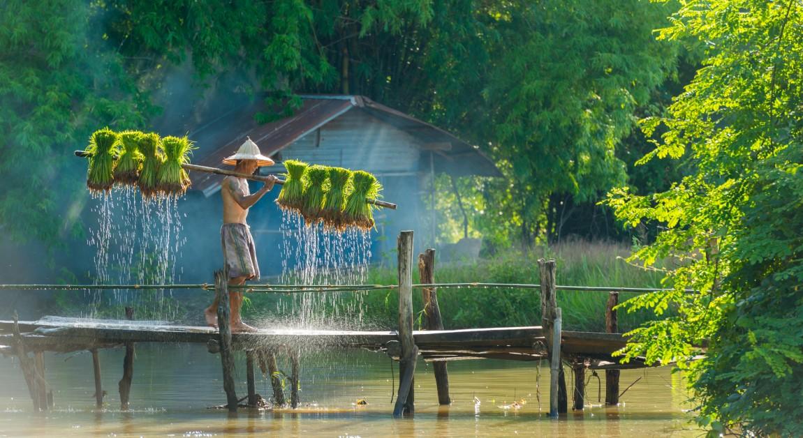 Thailand's Reisezeit mit den mitunter schönsten Naturschauspielen ist die Grüne Jahreszeit, die auch die Regenzeit miteinschließt. (#2)
