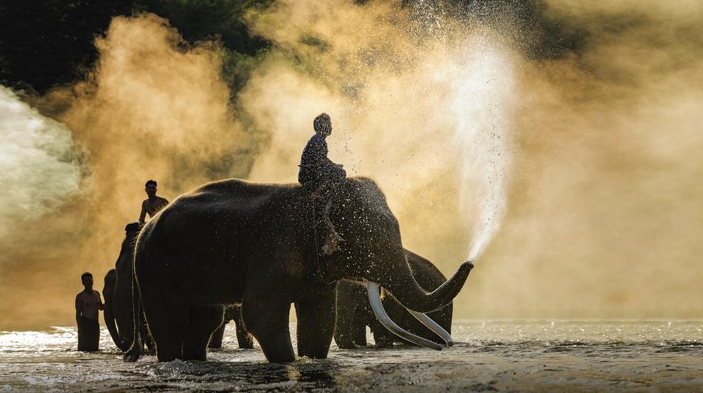 In Thailand ist die perfekte Reisezeit für Trekking eher nicht der Sommer.  Wie hier am Fluß Mahout in Chiang Mai suchen Elefanten wie Menschen der sommerlichen Hitze zu entfiehen. (#5)