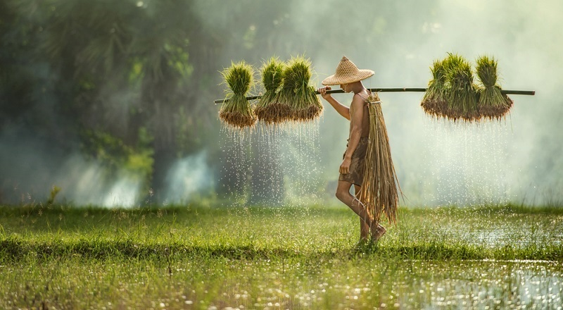 Die Trockenzeit dauert in dieser Region von Oktober bis März, von April bis September herrscht folglich die Regenzeit.