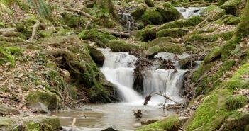 Wandern im Odenwald: 3 kindergerechte Touren