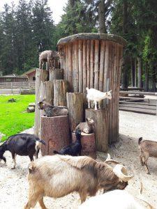 Bayerwald Tierpark Lohberg: Echt einen Ausflug wert!