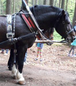 Pferdekutsche fahren auf der Mutter-Kind-Kur in Zwiesel: Für mich und meine Kinder ein Highlight!