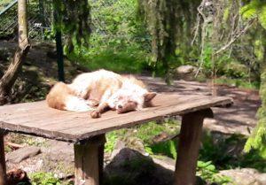 Tierpark Lohberg: Wildtiere hautnah!