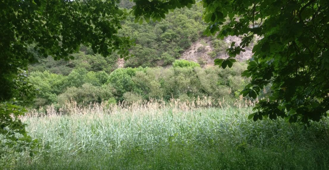 Der Fußweg entlang der Nahe gibt uns Wanderern noch nicht den Blick frei auf den Fluss. Doch was wir sehen, lässt uns an der Nahe weiter wandern.