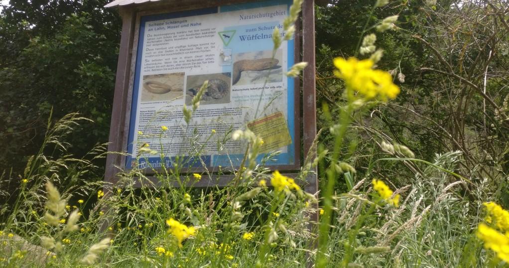 Nachhaltiges Wandern an der Nahe: das Hinweisschild macht auf die bedrohte Art der Würfelnatter aufmerksam.