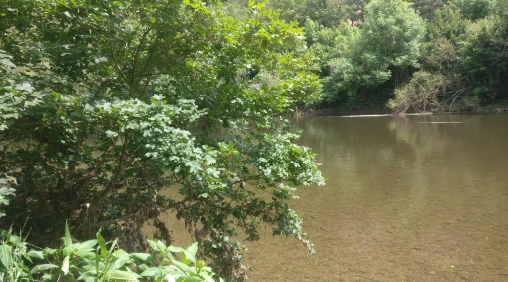 Jetzt können wir wirklich vom Wandern an der Nahe sprechen. Der Fluss zeigt sich dem ausdauernden Wanderer in seiner ganzen Schönheit. Wie wir von unserem Kartenstudium wissen, ist es nun nicht mehr weit bis Bad Münster am Stein.