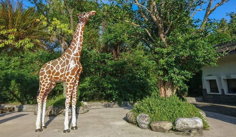 In den vergangenen zwölf Jahren starben mehr als 40 Giraffen in deutschen Zoos.