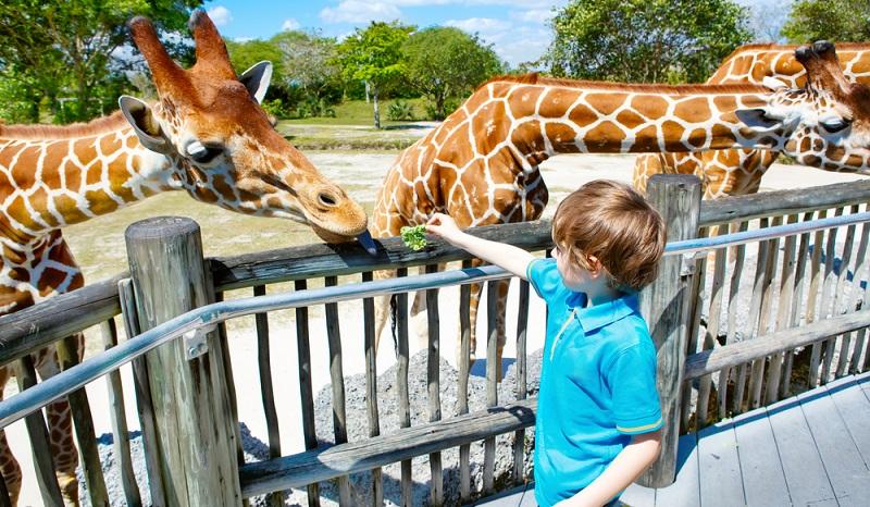 Befürworter der Zoohaltung behaupten, dass Kinder ansonsten keine Möglichkeit hätten, Giraffen hautnah kennenzulernen.
