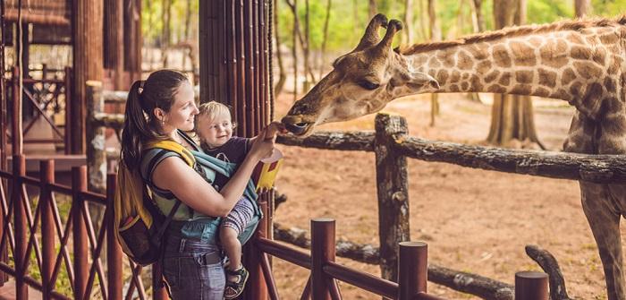 Tierquälerei oder Artenschutz? Das Sterben von Giraffen in deutschen Zoos