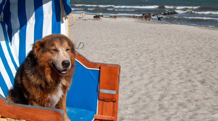Ostseestrand ist Hundeland. (Foto: shutterstock - Sabine Schoenfeld)